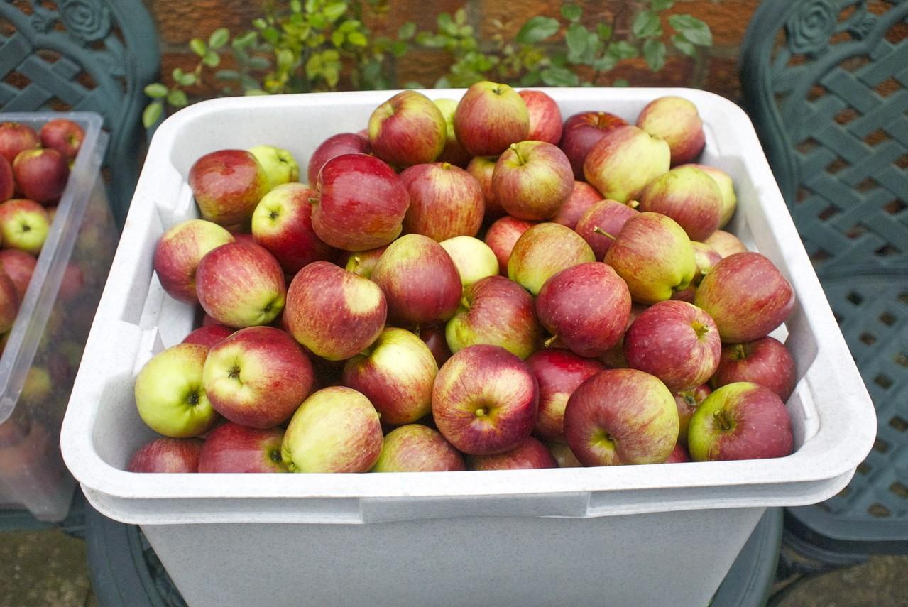 Uprawianie jabłek – na co powinniśmy zwrócić uwagę?